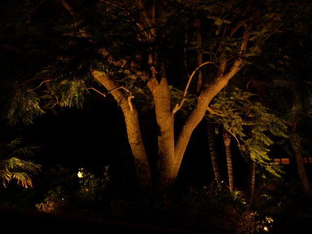 Simi Valley Landscape Lighting